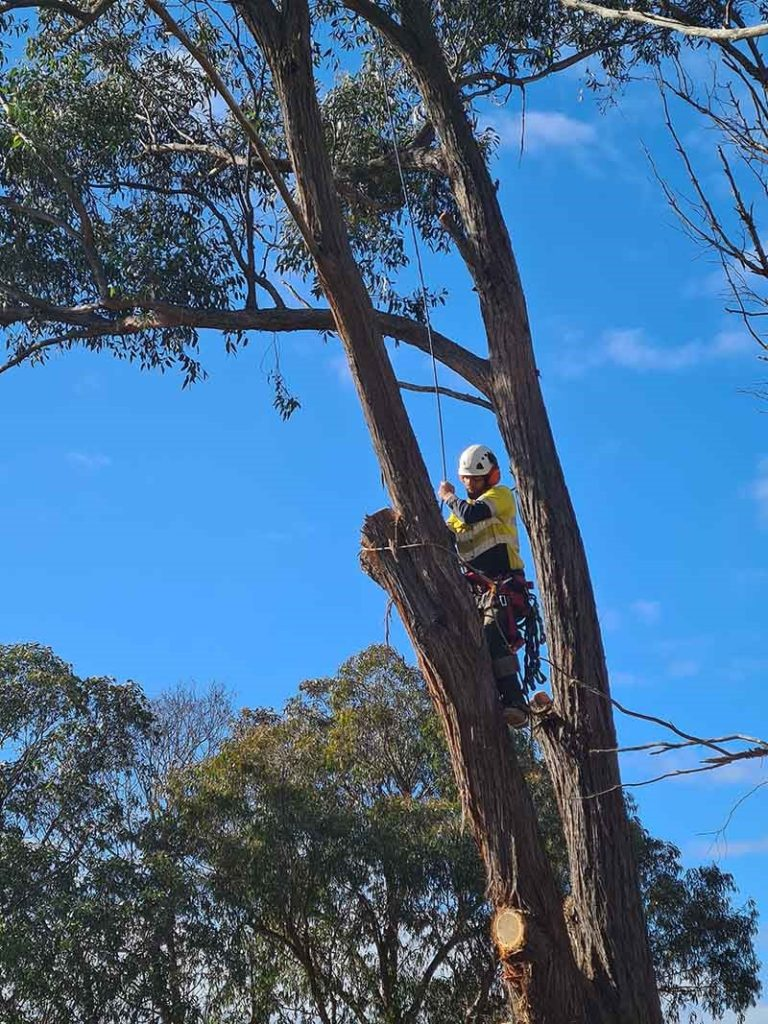 The Changing World Of Arboriculture